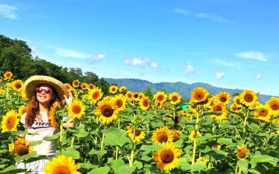 Mariano's Blooming Agri-Tourism Park: Sunflower Garden in Tupi, South Cotabato