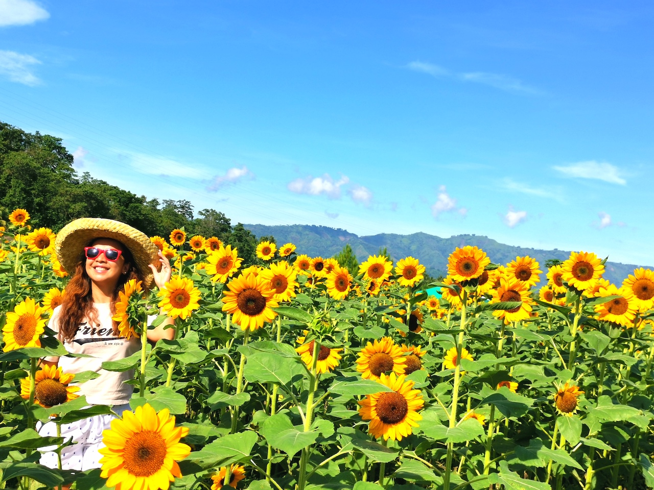Marirano's Blooming park-sunflower garden-Tupi-South Cotabato